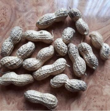 Выращивание арахиса на окне и  приусадебном участке