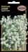 Цветы Алиссум Белый