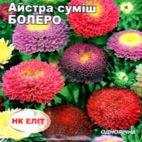 Цветы Астра смесь Болеро