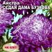 Цветы Астра Седая дама сиреневая