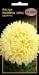 Цветы Астра Полярная звезда