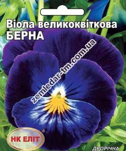 Цветы Виола крупноцветковая Берна