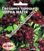 Цветы Гвоздика Турецкая Черная Магия