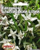 Цветы Эдельвейс Альпийский Белый
