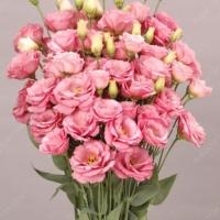 Цветы Эустома АВС 2 F1, Розовый туман