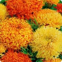 Цветы Бархатцы смесь Фантастик