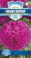 Цветы Астра Гигант Пурпур