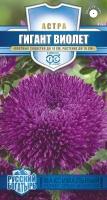 Цветы Астра Гигант Виолетт