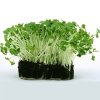 Микрозелень Гречка зеленая органическая