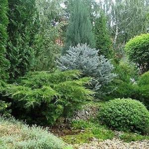 Набор для защиты хвойных растений от грибковых болезней и вредителей №1