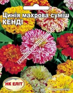 Цветы Циния смесь Георгиновидная Кенди