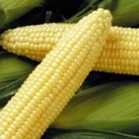 Кукуруза сахарная Деликатесная (СЦ)