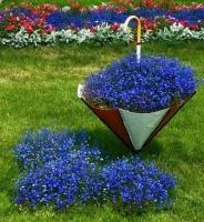 Цветы Лобелия Синий Каскад, ампельная