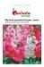 Цветы Матиола Колумн смесь махровая