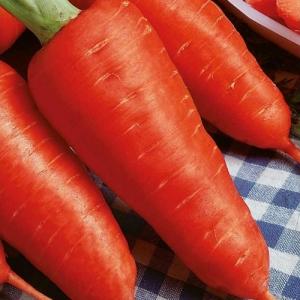 Морковь Шантане Сквирская