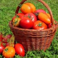 Набор для защиты томатов, картофеля и лука на 10 л воды