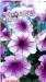 Цветы Петуния Нора F1