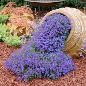 Цветы Обриета Синий Каскад