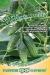 Огурец Зеленая лавина F1