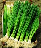 Лук на зелень Параде