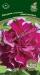 Цветы Петуния Пируэтт Роуз F1