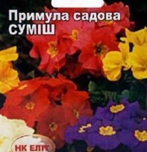 Цветы смесь Примула