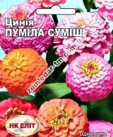 Цветы Циния смесь Пумила