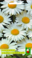 Цветы Ромашка Крупноцветковая