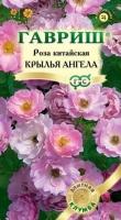 Цветы Роза китайская Крылья ангела