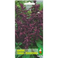 Цветы Сальвия Фиолетовая