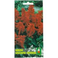 Цветы Сальвия Красная