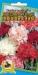 Цветы Гвоздика гренадин Северное Сияние