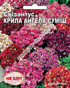 Цветы Схизантус Крылья Ангела