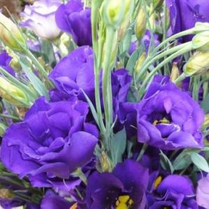 Цветы Эустома АВС 2 F1, синяя, махровая