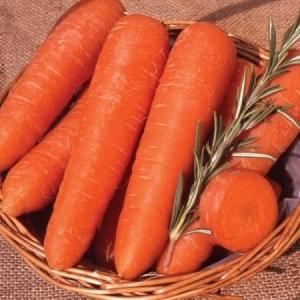 Морковь Сластена