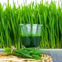 Микрозелень Пшеница Чернобровая Натуральная