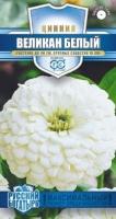 Цветы Циния Великан белый