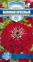 Цветы Циния Великан красный