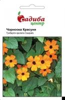 Цветы Тунбергия Черноглазая Красавица
