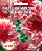 Цветы Василек Красный Шар