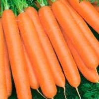 Морковь Вовка-Морковка