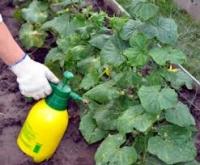 Наборы для защиты огурца от грибковых болезней и вредителей